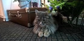 Посещение «Музея кота» для многодетных семей фото