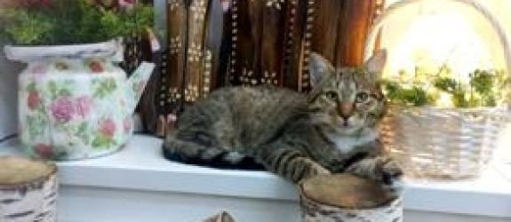 Музей «Музей кота» фото