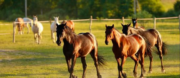 Частная конюшня Табун фото