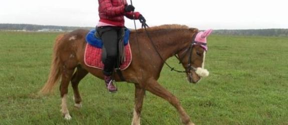Конный клуб Конный клуб «Лошадка по имени Миссия надежды» фото