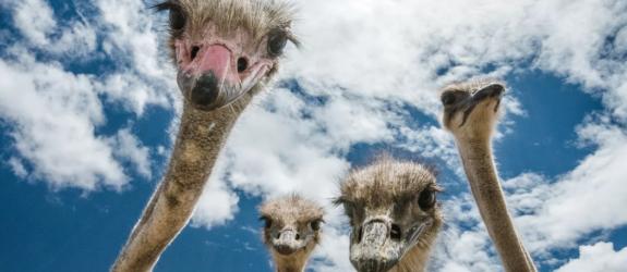 Экскурсия по страусиной ферме Птичий мир фото